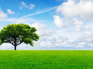 Nuestros objetivos ambientales